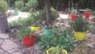 sacred garden in the Mount Helix area of San Diego2
